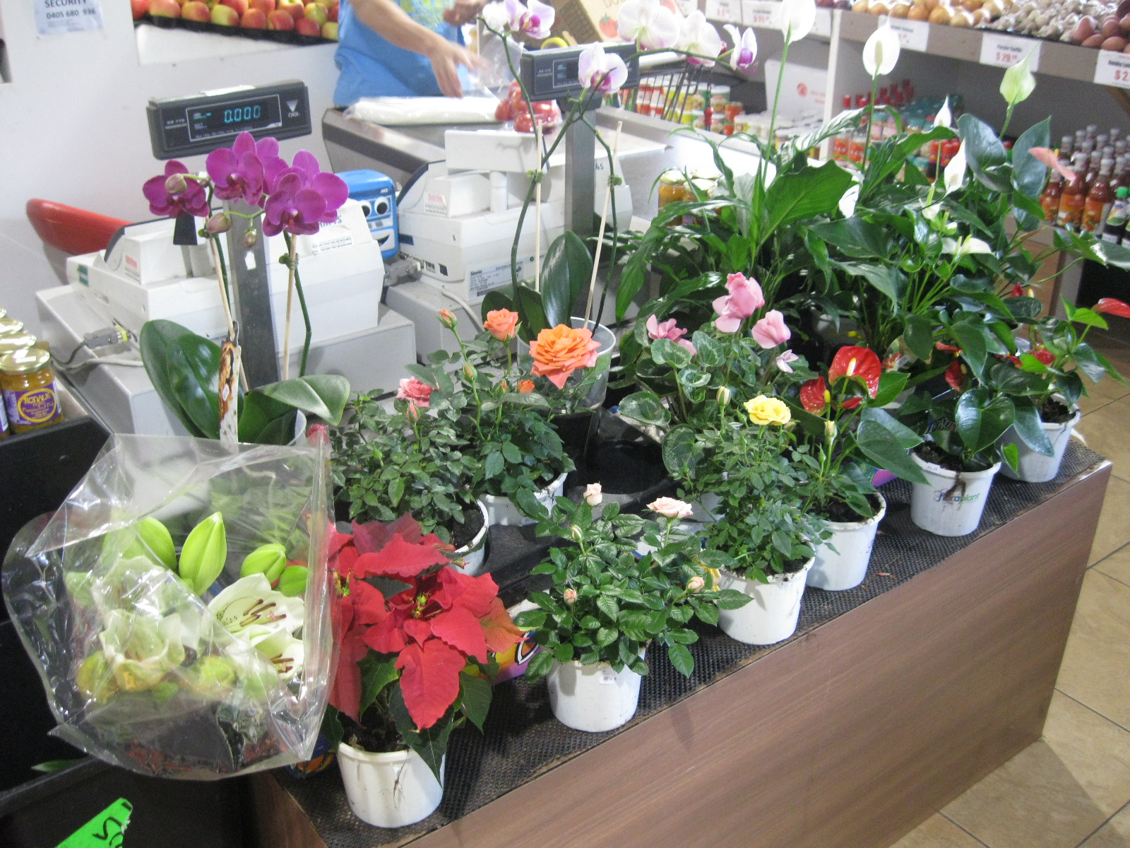 Flowering plants for sale at a grocery store in Freemantle, Western Australia