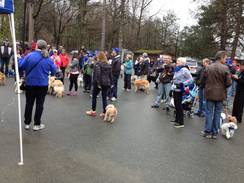 A crowd of dogs with their people, setting off for the Canines for Carroll walk
