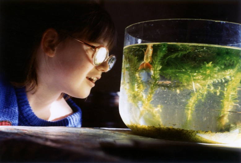 A young girl wearing thick glasses is looking very closely into a goldfish bowl.