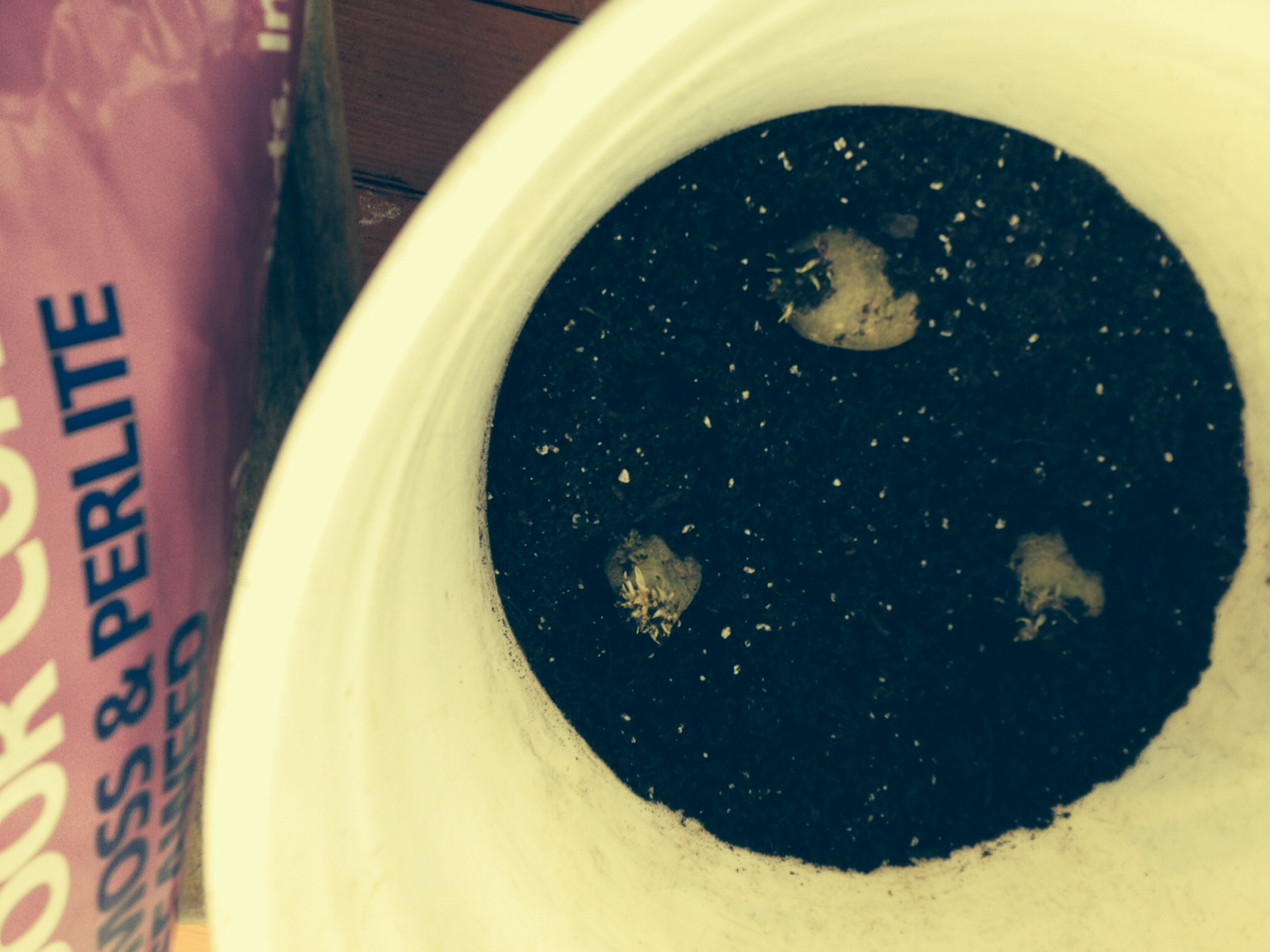 A white bucket with 3 little seed potatoes spaced out in the soil. A bag of potting soil is close by on the left.