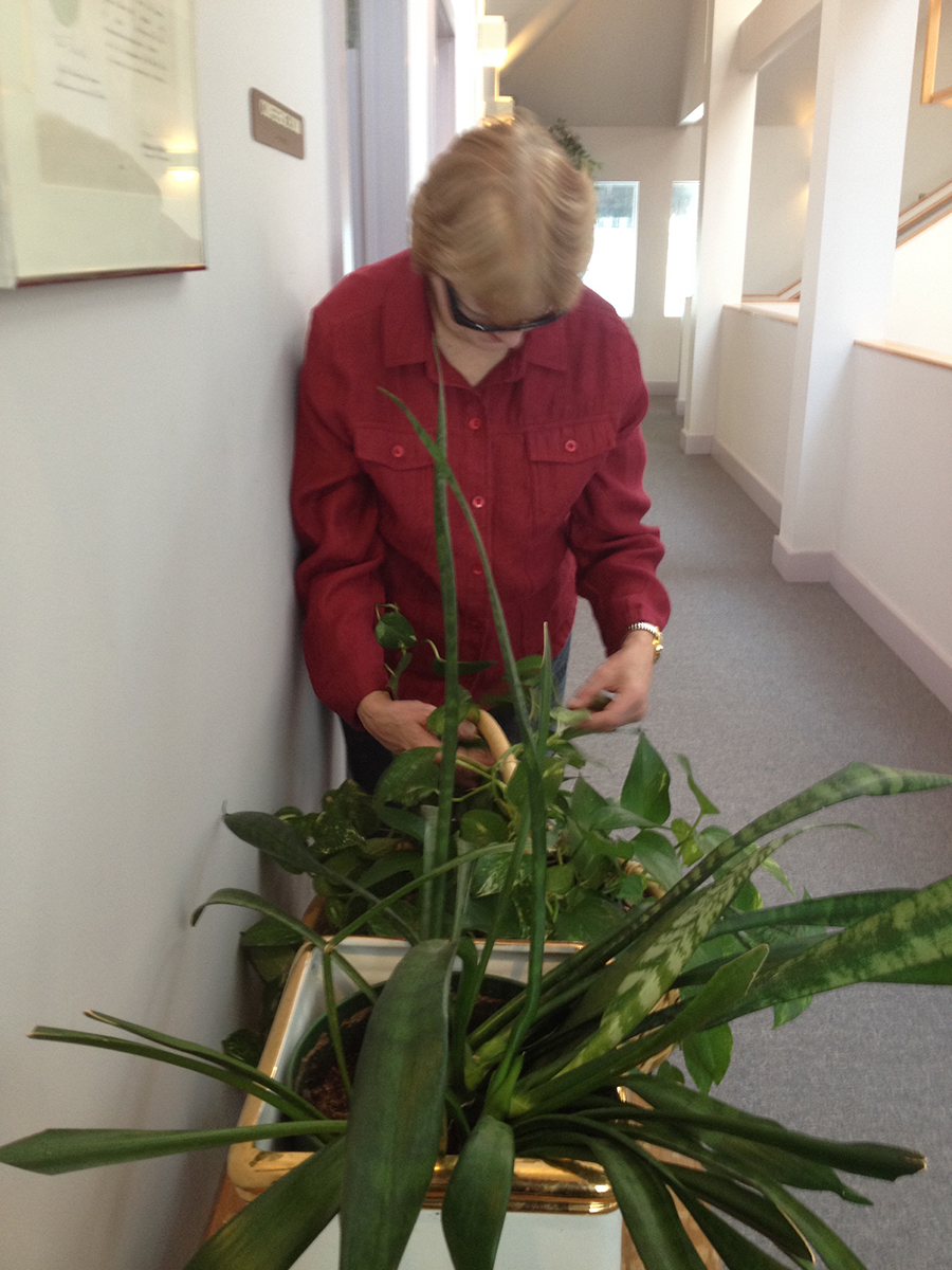 Jan pulling dead leaves off plants outside the Board Room at the Carroll Center for the Blind