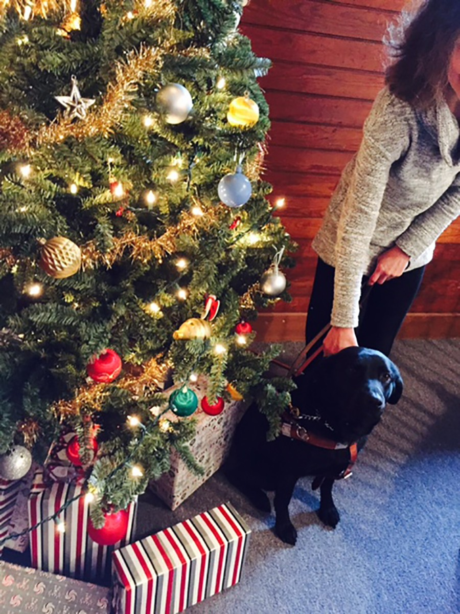 A lighted Christmas Tree with gifts under and a black lab guidedog sitting beside it. The hand of   its owner is holding the harness.