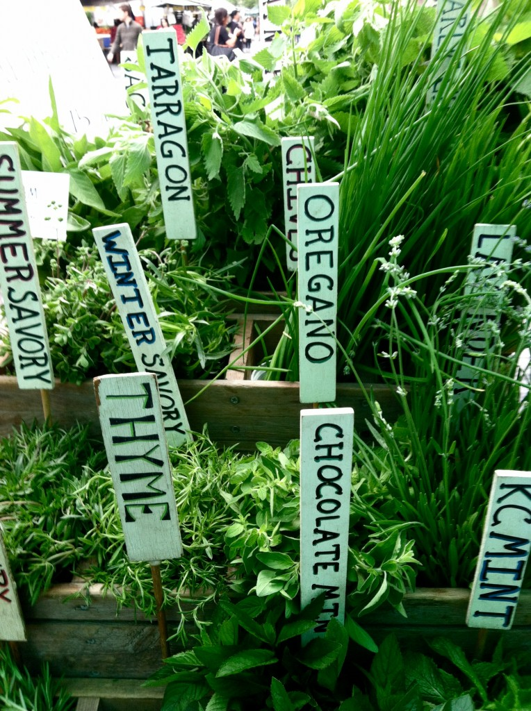 An array of herbs, each with labels telling the name of the herb.